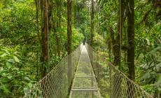Niezwykły system mostów w sercu dżungli