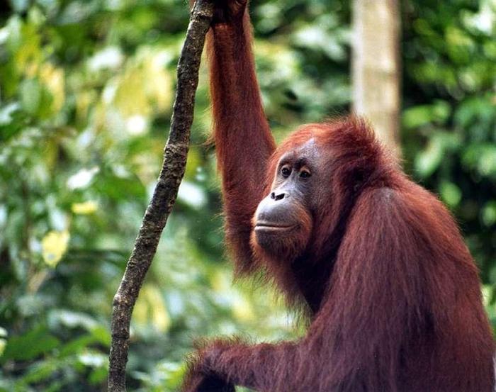 W odludnych lasach krążą tapiry, pantery płoszą nosacze, a małpy rzucają się do rzeki, żeby zanurkow