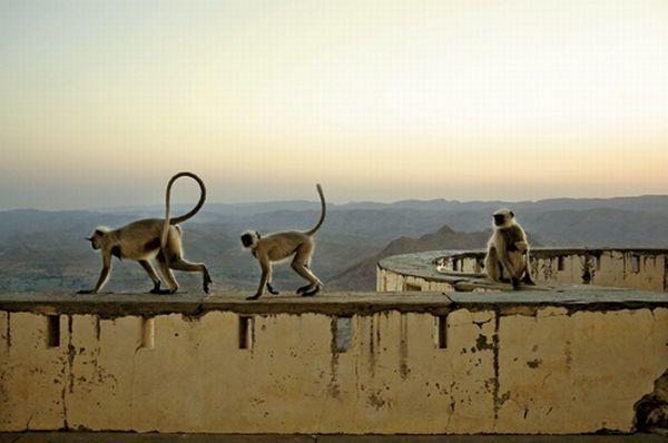 Monsunowy Pałac zamieszkują małpy i kukły ze starego przedstawienia.