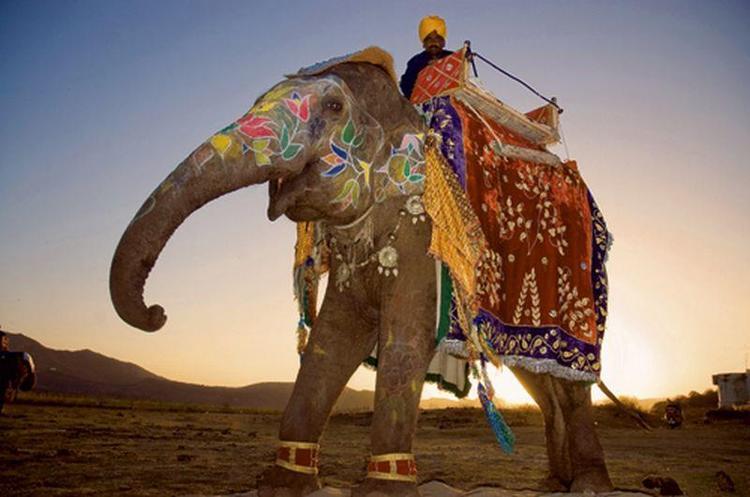 Kolorowe słonie o wschodzie słońca - lep na turystów. Nie dałem się skusić, ale zdjęcie należało zro