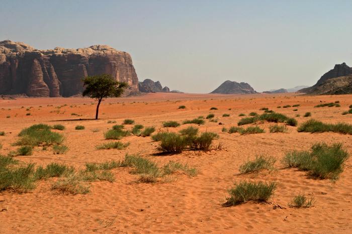Jordania - barwy  pustyni.