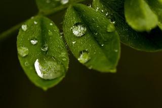 Deszczowy Biskupin