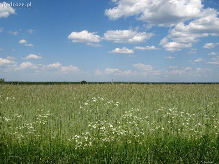 Polska: W drodze z Białegostoku do Tykocina.