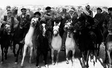 Około pięćdziesięciu koni, rżąc i odsłaniając zęby, pędzi po stadionie. Co jakiś czas przeraźliwy kw