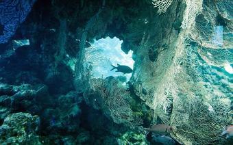 Pośród raf koralowych u wybrzeży Izraela pływać można cały rok. To najbliższa tego rodzaju atrakcja