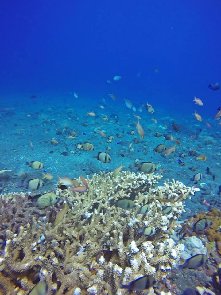 Podwodne życie na Gili Layer