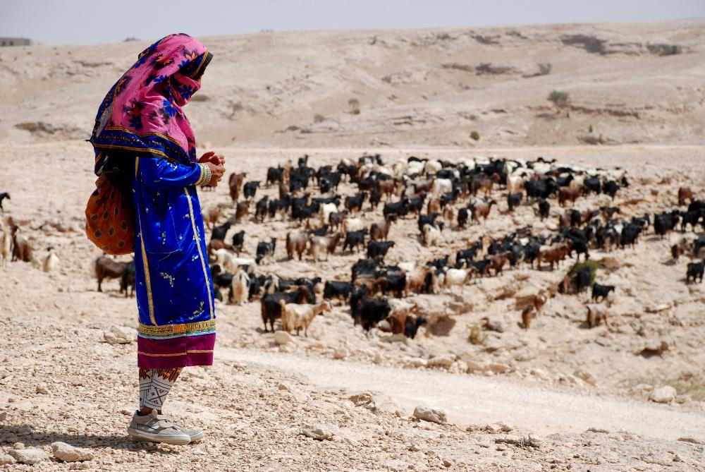 Pasterka i stado kóz