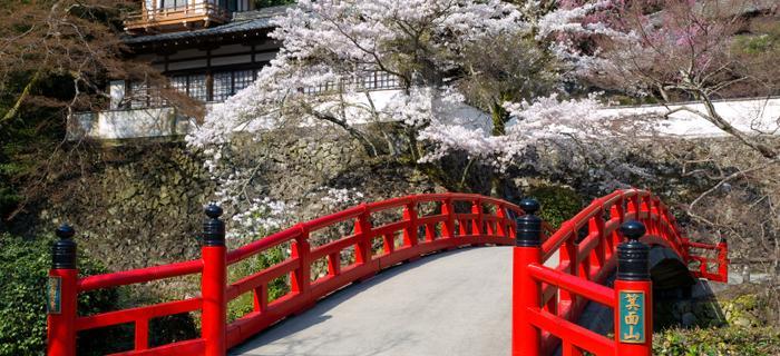 Kwitnące wiśnie w Osace