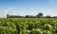 Uprawa winorośli w okolicy Bordeaux