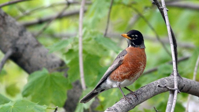 Obserwacja ptaków to jedno z najbardziej relaksujących zajęć