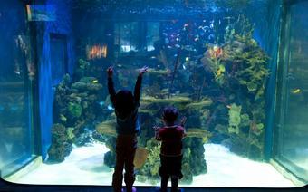 Wizyta w akwarium jest dla dzieciaków wielką frajdą