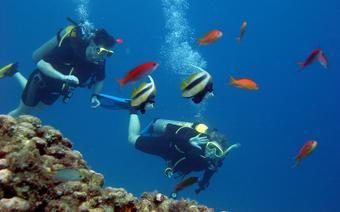 Po kilkugodzinnynm kursie możemy śmiało rozpocząć eksplorację dna morskiego