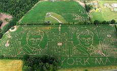 Wizerunek Harrego Pottera na kukurydzianym polu w York Maze