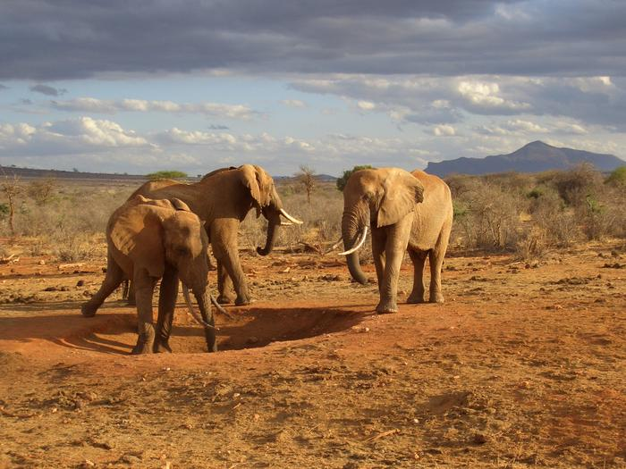 Krajobrazy kenijskie