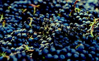 Winnice w Kaliforni