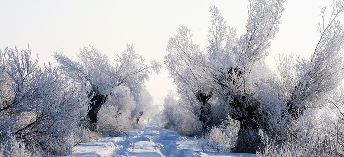 Żuławy zasypał śnieg. Droga polna w okolicach Malborka
