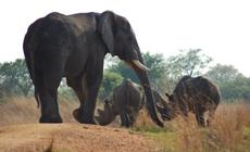 Zwierzęta w rezerwacie Imire