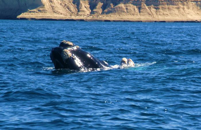 Wieloryby ,wodospady i steki...