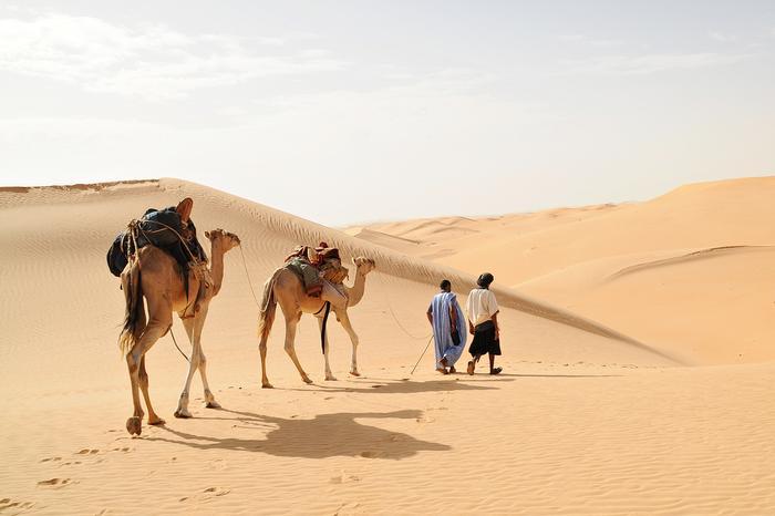 Sahara (Julia Wizowska)