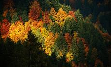 jesień, pogoda, prognoza pogody, las, drzewa