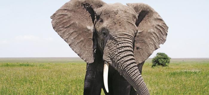Słonie świadomie wybierają życie na terenie parku, czyli obszaru chronionego