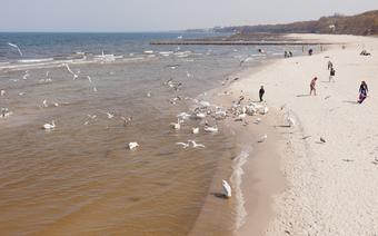 Kołobrzeg - plaża w Kołobrzegu