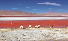 Laguna Colorada, Boliwia