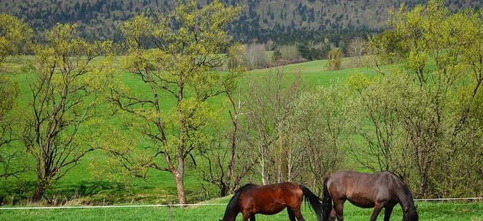 Góry w Polsce: Beskid Niski
