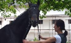 Stadnina koni w Sierakowie