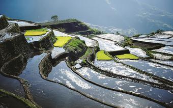 Sadzenie ryżu na imponujących tarasach ryżowych Kalingi rozpoczyna się zwykle w lutym