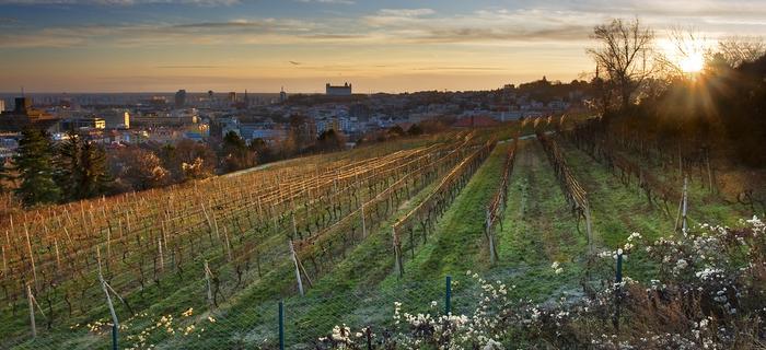 Winnice pod Bratysławą