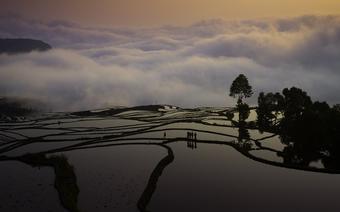 Tarasy ryżowe o wschodzie słońca