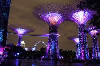 Singapur – lwie miasto