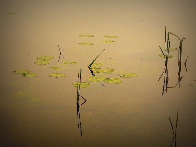 Spokojna tafla jeziora jest niczym obraz