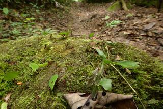 Krokodyle, małpki i wszechobecne komary czyli kajakiem przez Amazonię (cześć 1)