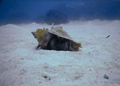 Krab pod wodą