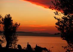 Pawie podziwiające zachód słońca w Punta Ballena