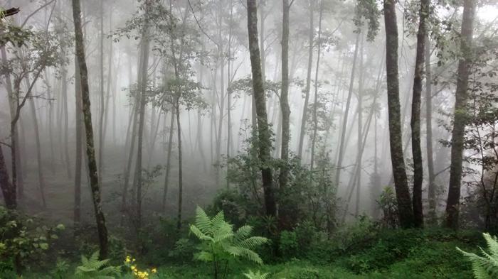 Ciężka i wilgotna mgła w drodze na Ponn Hill.