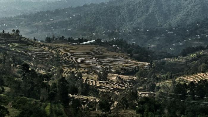 Kotlina Kathmandu, pola ryżowe