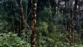 W dżungli próbuję zobaczyć mały czerwony punkt. Gdzie jest Wally