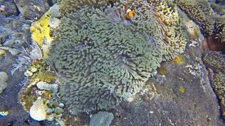 Podwodne Bali