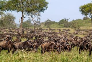 """Tanzania, w poszukiwaniu """"wielkiej piątki"""""""