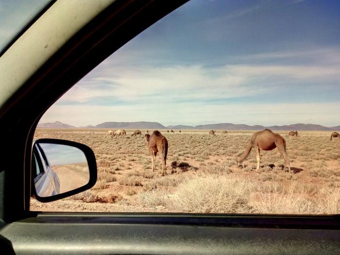 Za oknami Camele i od kilku godzin brak ludzi. Pięknie !