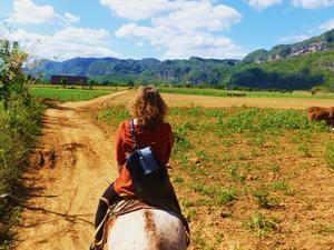 Konno przez dolinę Viñales