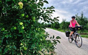 W sadach owocowych przy szlaku Green Velo