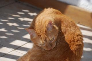 Przygody kota-podróżnika do Nairobi