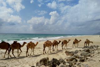 Hulajnogą przez Szczęśliwą Arabię.