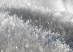 Lapoński dywan śniegu