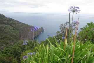 Odkrywamy wyspę wiecznej wiosny: Madera