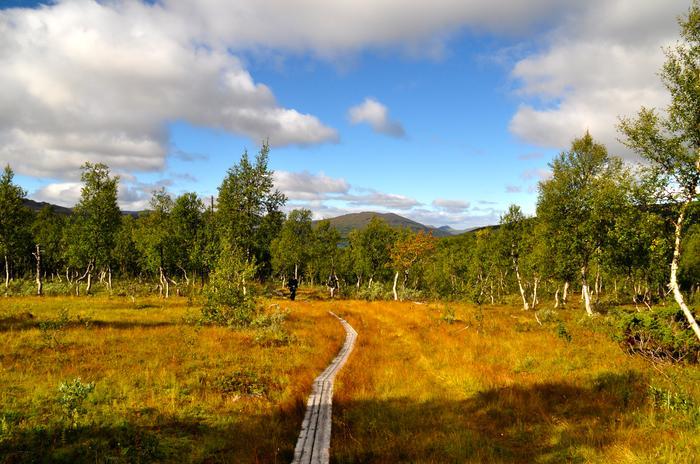 Szwedzkie ścieżki